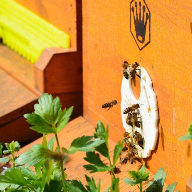 biogartenhonig-bienen-stock